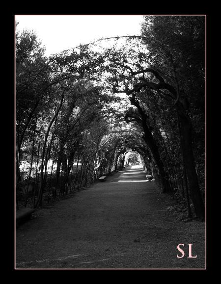 Boboli Gardens Arched Trees