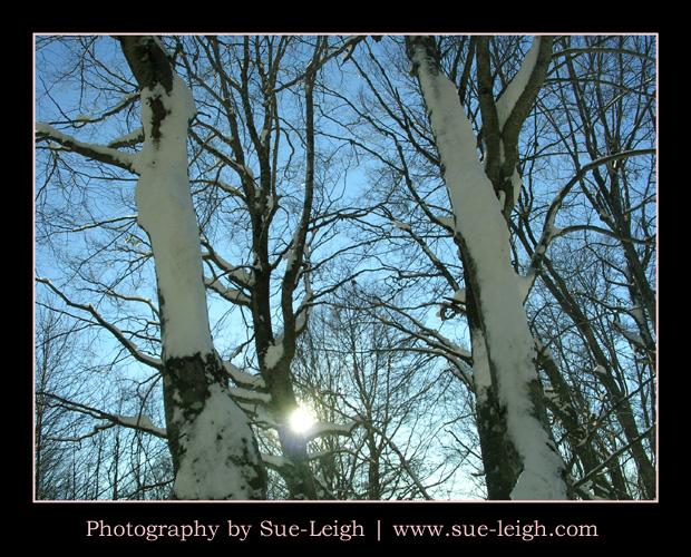 snowtrees-in-terminillo.jpg