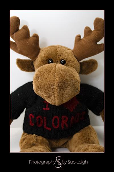 _mg_2237-moose.jpg
