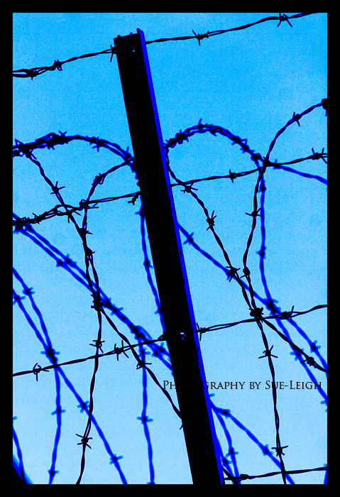 barbed-wire.jpg